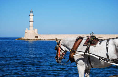A horse used for the transport of tourists stands in front of the old venetian lighthouse situated at Charnia on the greek island of crete. Stock Photo - 6970392