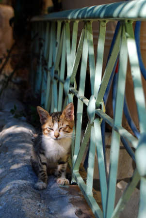 A stray kitten on the greek island of Crete wakes up to wonder whats going on. photo