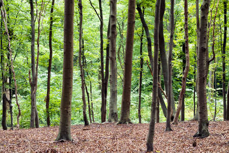 A background image of a woodland or forest area. photo
