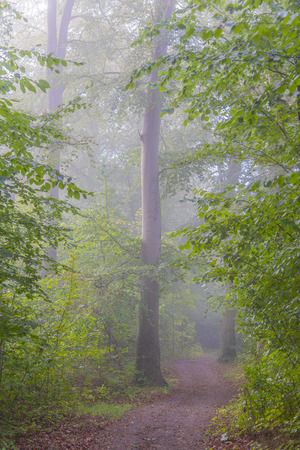 Fog descends on a woodlands path in the early morning