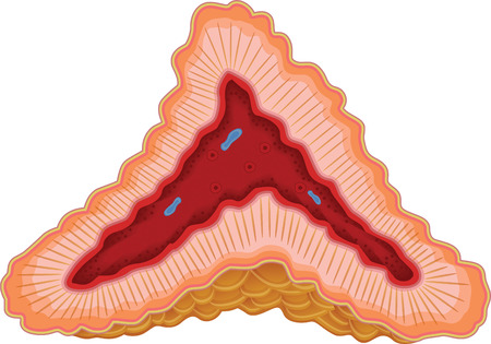 muscle cell: Adrenal Gland