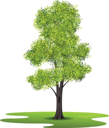 ash tree: Frassino Vettoriali