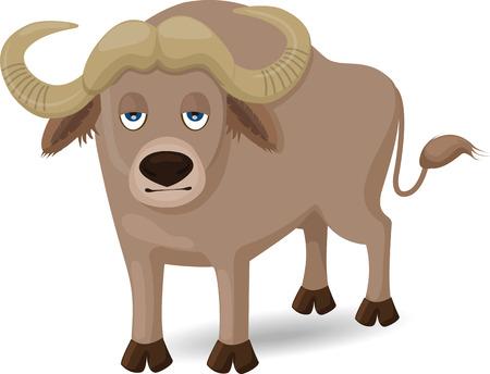 water buffalo: Buffalo