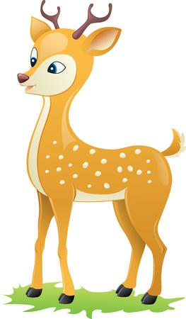 hoofed mammal: Spotted Deer