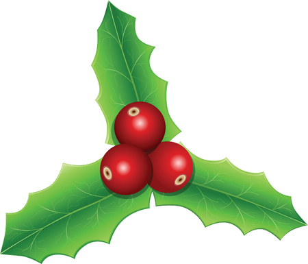 Holly Leaves - Christmas Vector