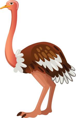 legged: Ostrich