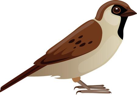 chordata: Sparrow