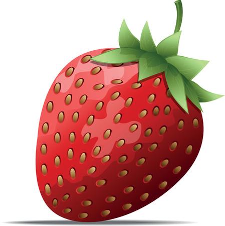 fraise: Fraise Illustration