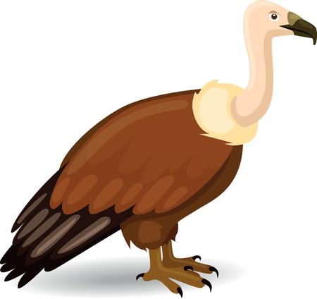 buzzard: Vulture