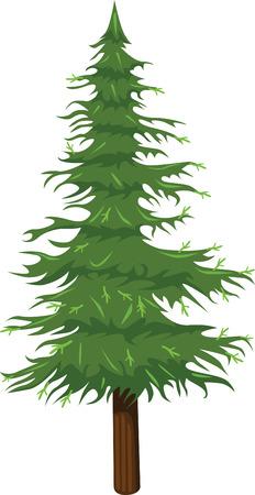 carboniferous: Pine prehistoric tree Illustration
