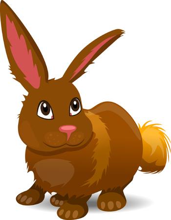buny: Rabbit Cartoon