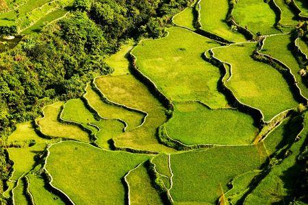feat: Hapao terrazas de arroz, al norte de Manila, Filipinas Foto de archivo