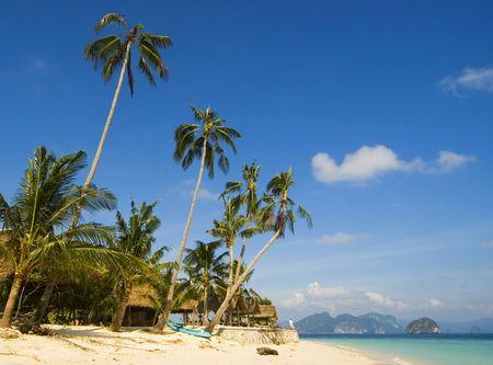 palawan: Cococnut �rboles a lo largo de playa blanca en Palawan  Foto de archivo