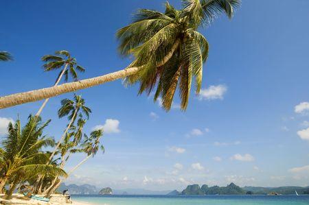 palawan: Coconut trees along white beach in Palawan Stock Photo