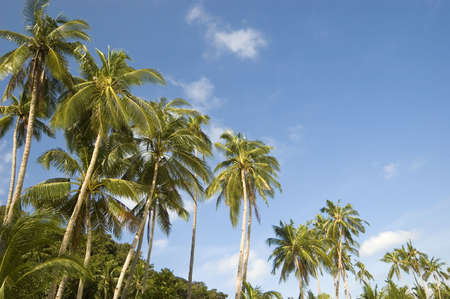 Coconut trees along beach Stock Photo - 2237664