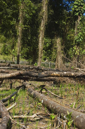 Trees are slashed and burned to give way to farming photo