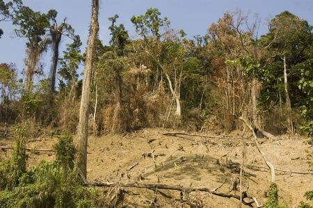 deforestation: Forest are usually destroyed in the Philippines to provide an area for planting.