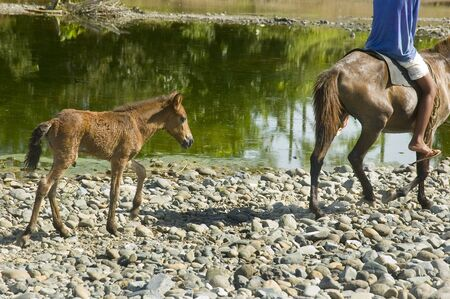 behind scenes: Mother horse and foal in Palanan, Isabela, Philippines