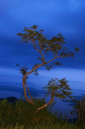 Tree overlooking Taal Volcano photo