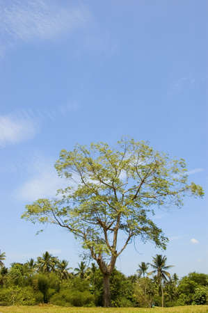 acres: acres agricultural agriculture banana blue business coconut cropping dirt drought dry farm farming farmland grass green ground hectares horizon land mangoes open philippines sky small trees