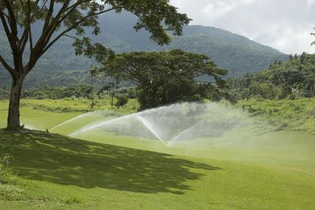 Watering the greens