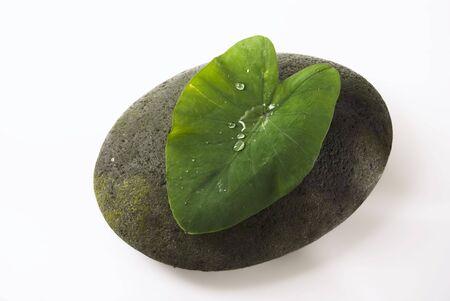 Water droplets on big leaf