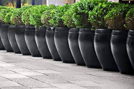 Line of big potted shrubs outside a restaurant