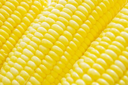 Pattern of newly harvested yellow corns photo