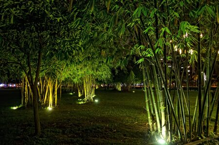 Night shot of bamboo trees in a city garden Stock Photo - 11614710