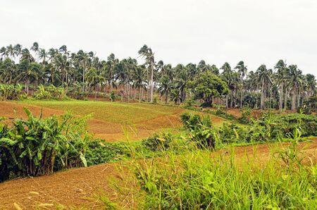 far east: Finca reci�n cultivado en el Lejano Oriente