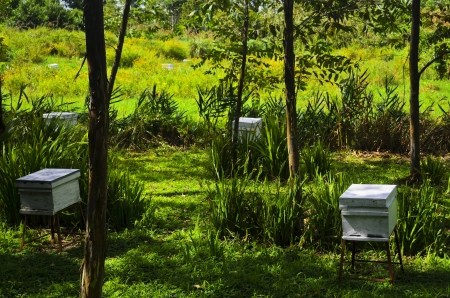 White boxes of honey bees in a honey bee farm  Stock Photo