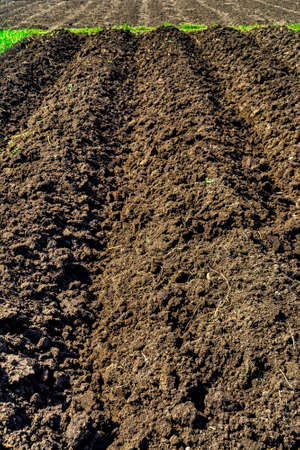 plots: Newly cultivated plots ready for vegetable planting