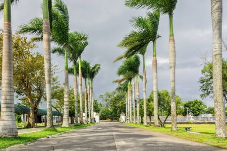 palm lined: Palm lined driveway with fence and park benches