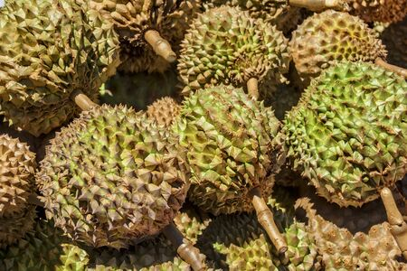 spiky: Spiky and smelly Philippines Durian for sale in a local market