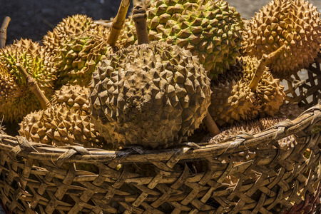 spiky: Basket of spiky and smelly Durian for sale in a local market