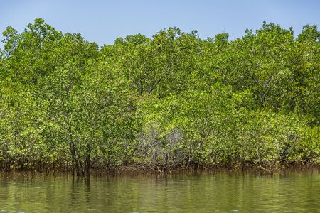 Mangrove forest in Zambales, North of Luzon, Philippines