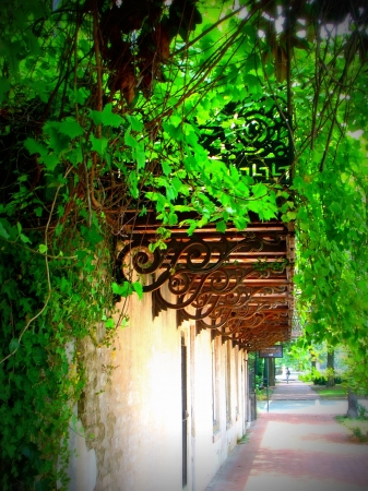 wrought iron and grape leaves photo