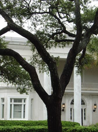 live oak at the empty plantation photo