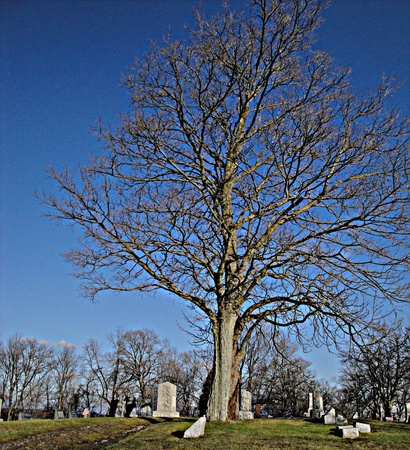 grand tree at the cemetary in autumn photo