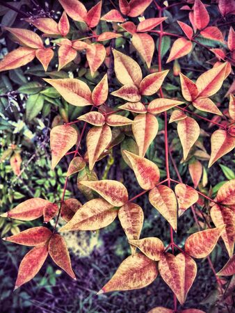 brilliance: Autumn Brilliance