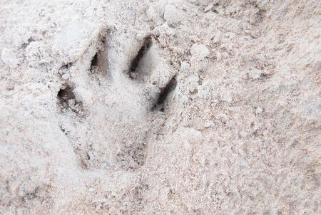 Dog footprint on the ground