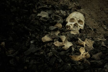 Skull and bones digged from pit in the scary graveyard which has dim light Stock Photo - 133608865