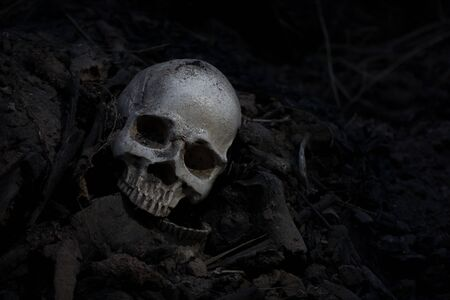 Skull and bones digged from pit in the scary graveyard  / Still life and art image Stock Photo - 133608985