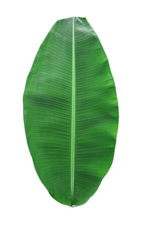 tropical green banana leaf isolated on white background with clipping path for design elements, summer background, abstract green leaves texture, nature background