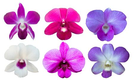 set Orchids on a white background