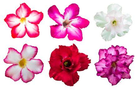 Set Azalea flowers on isolated white background
