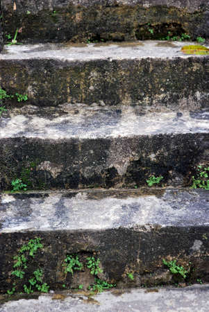 mossy concrete stairs photo