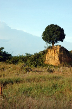 a tree left over from the destruction of a hill photo