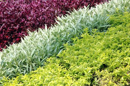sequences: sequences of the three types of existing plants in the garden