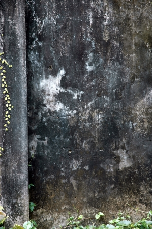 dull walls with wild plants photo